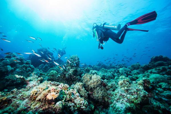 Scuba Diving Experiences in Kos